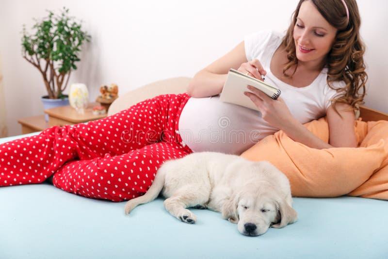 Беременная женщина с ее собакой дома стоковые изображения rf