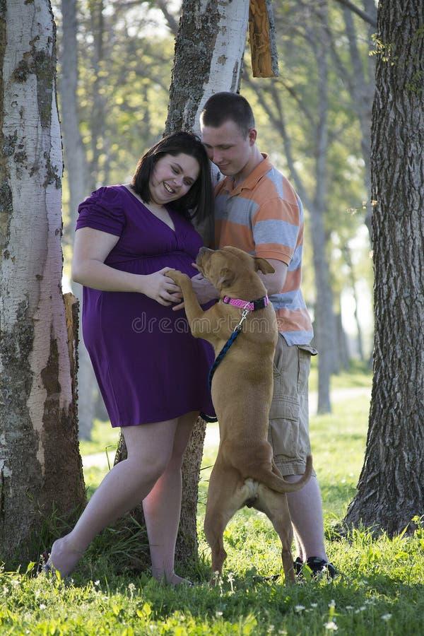 Беременная женщина с портретом папы и собаки стоковое изображение rf
