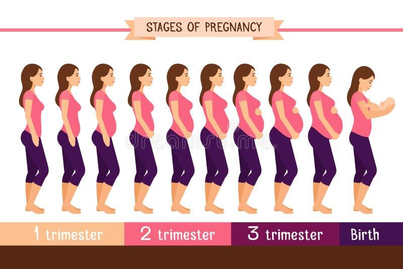 Беременность ставит плоскую иллюстрацию вектора Infographics trimester беременной женщины и рождения newborn иллюстрация штока