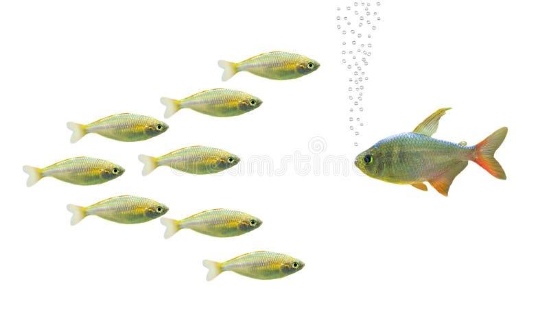 беседа рыб стоковое изображение rf