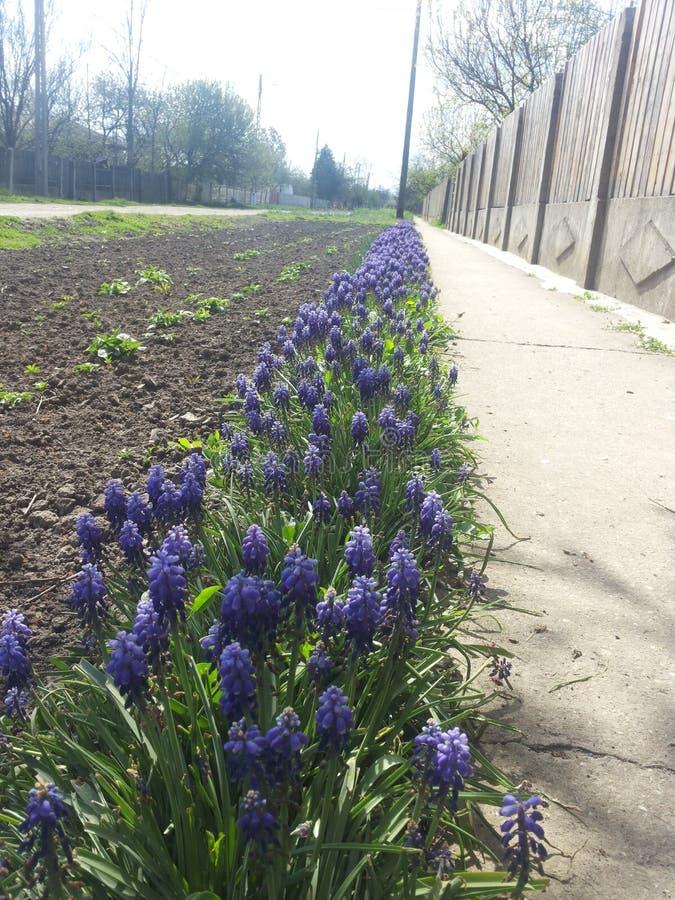 Бесконечная линия цветка стоковая фотография rf