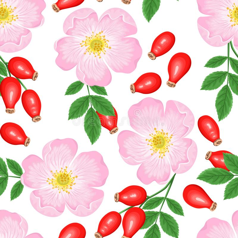 Бесшовный узор Розовый цветок, красная ягода и зеленые листья, изолированные на белом фоне Векторная иллюстрация собачьего роза иллюстрация штока