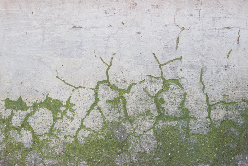 Бетонная стена с мхом стоковое изображение rf