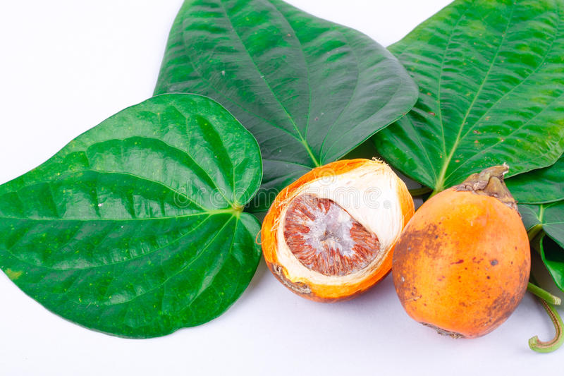 Бетэл - гайка и зеленые лист бетэла стоковая фотография rf