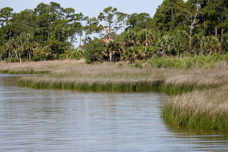 Бечевник залива с травами и деревьями стоковые фото