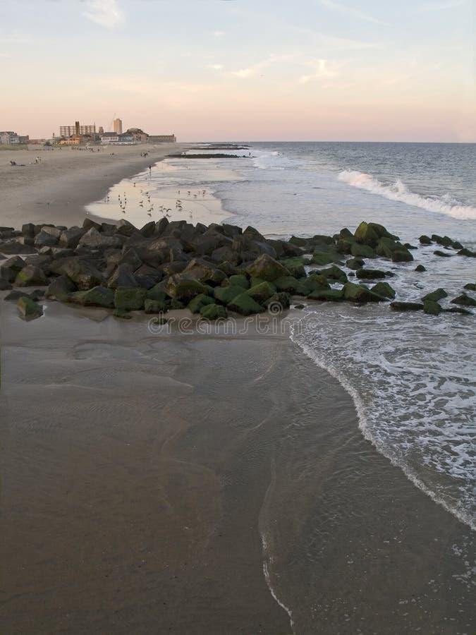 бечевник океана рощи стоковое фото