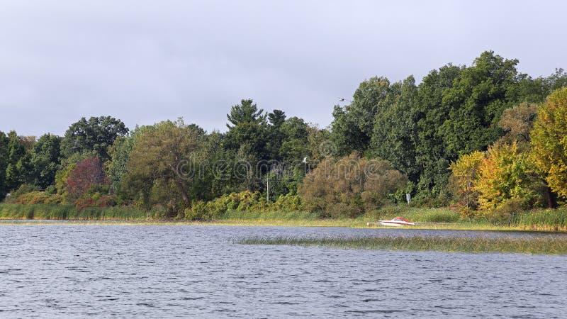 Бечевник реки с травами деревьев и шлюпкой стоковое изображение rf