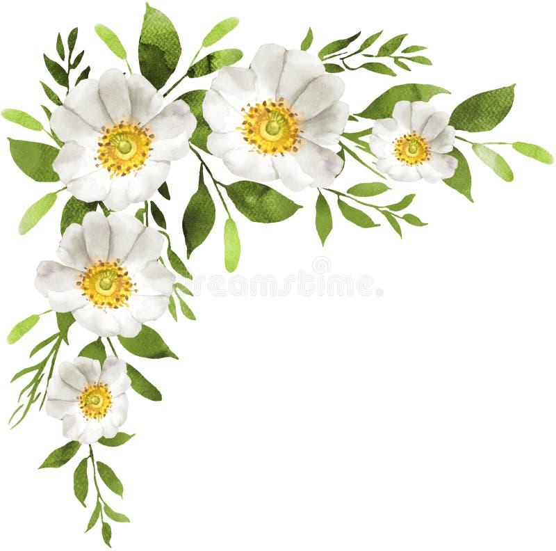 Белая акварель цветет украшение букета с белыми розами иллюстрация штока