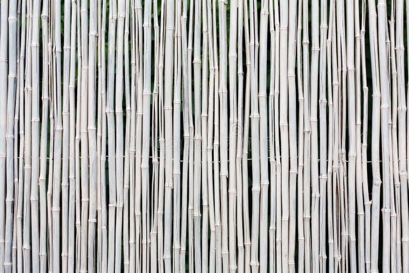 Белая бамбуковая предпосылка текстуры загородки стоковое фото