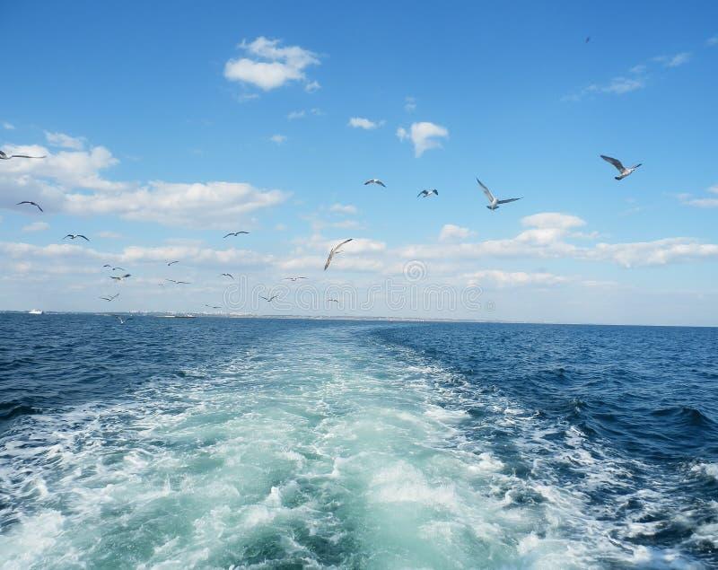 Белая вода выведенная крейсером мотора стоковое изображение