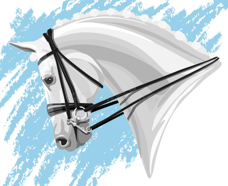 Белая голова лошади Dressage бесплатная иллюстрация