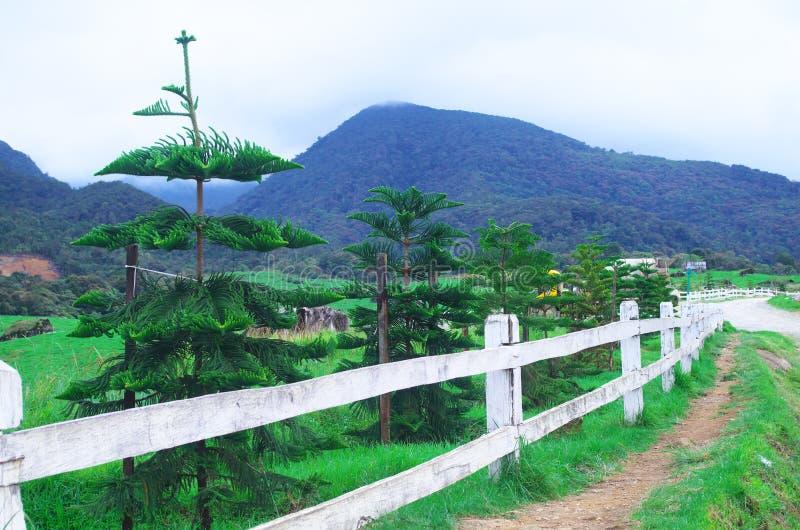 Белая загородка стоковое изображение