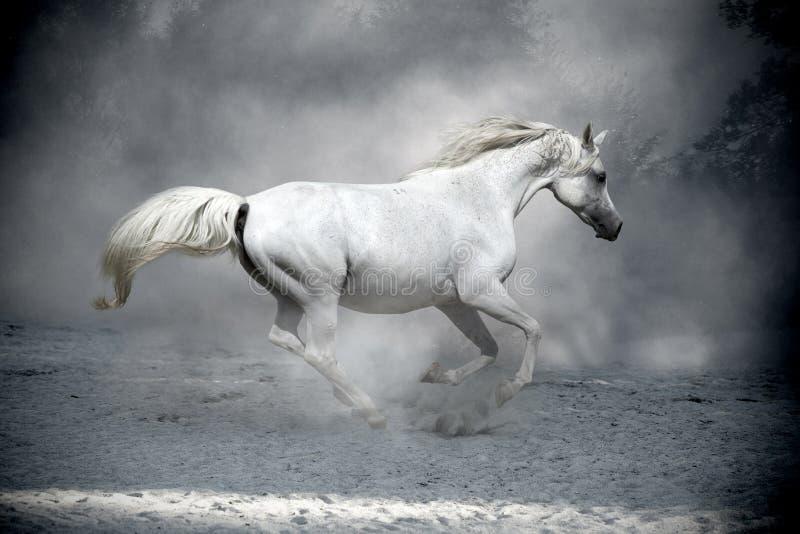 Белая лошадь в пыли стоковая фотография rf