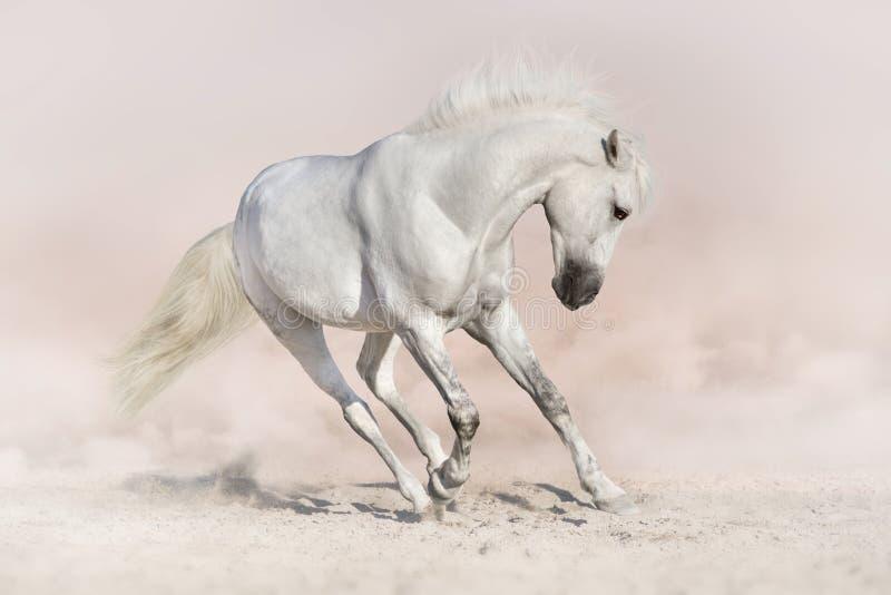 Белая лошадь в светлом backround стоковое фото rf