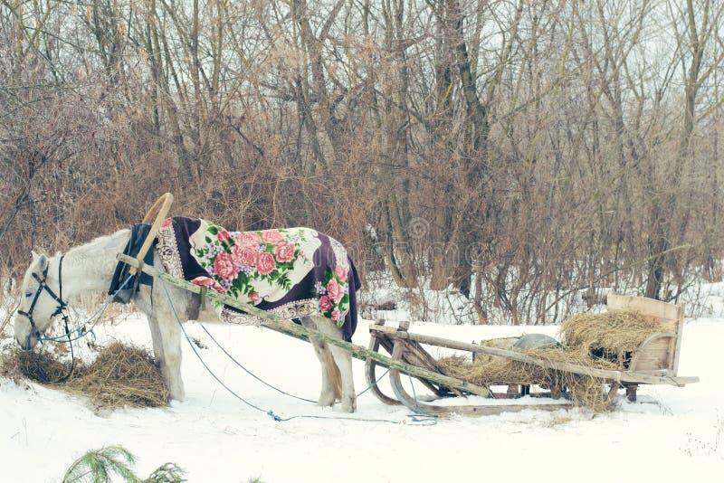 Белая лошадь и сани в зиме стоковое фото
