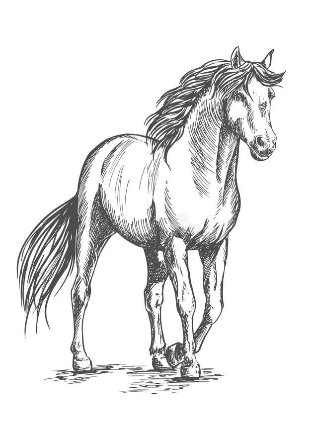 Белая лошадь стоя с поднятым копытом иллюстрация вектора
