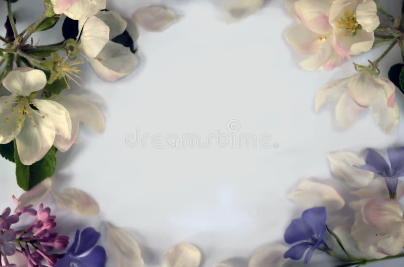 Белая предпосылка с цветками весны стоковая фотография rf