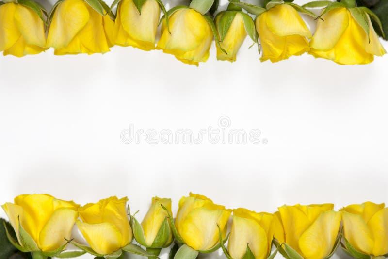 Белая рамка с розой желтого цвета на белой предпосылке стоковое изображение