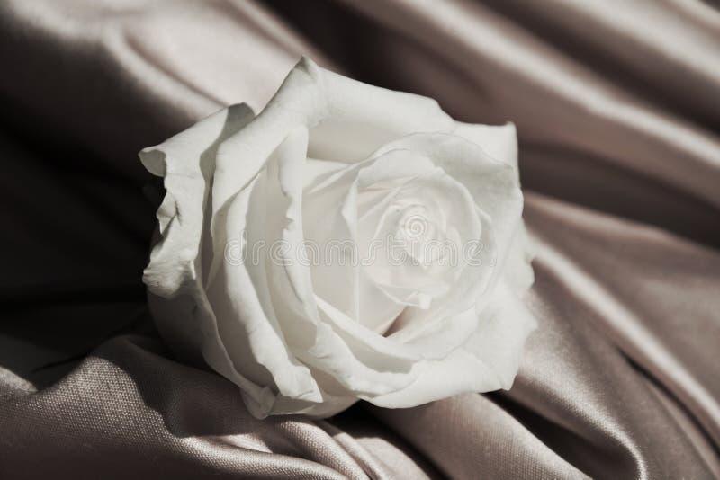 Белая роза в винтажных оттенках, конец вверх стоковые изображения rf