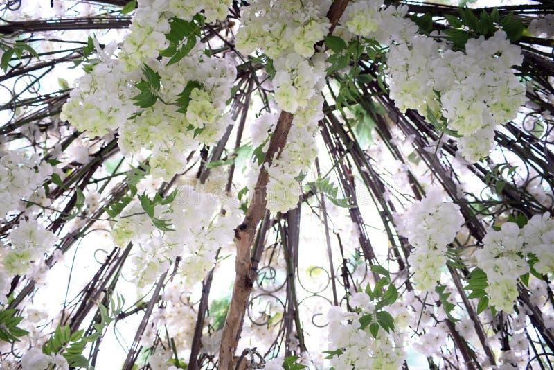 Белая роза в Корее Everland стоковая фотография rf