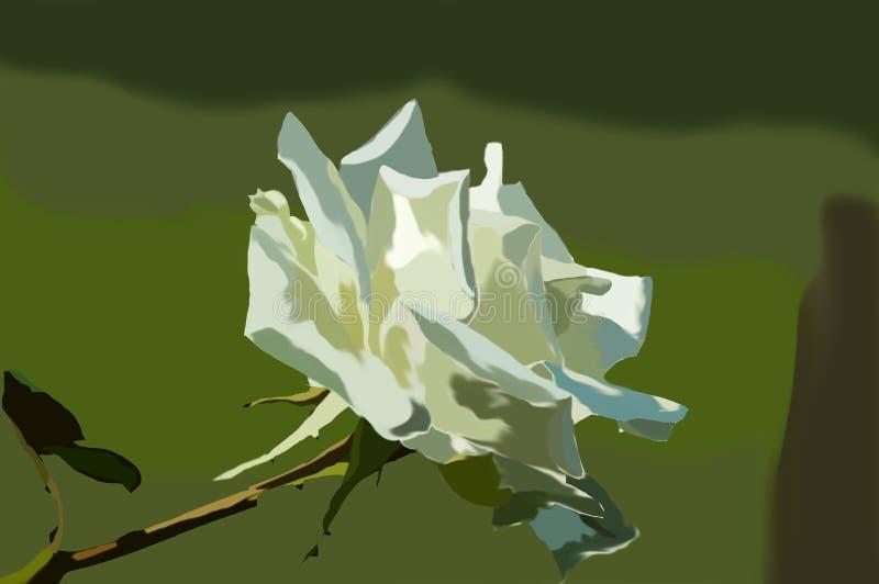 Белая роза в саде стоковые фото
