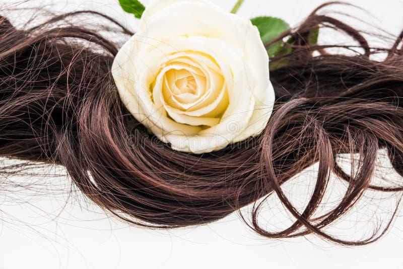 Белая роза на коричневых волосах стоковое фото rf
