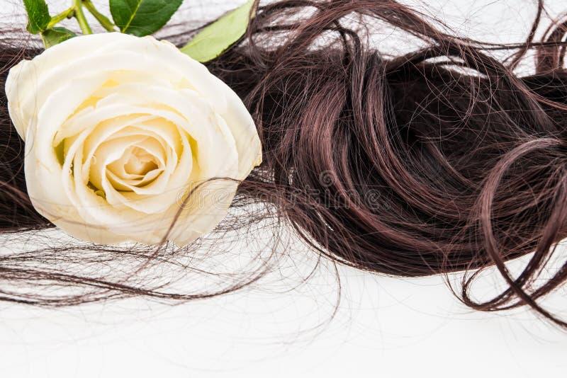 Белая роза на коричневых волосах стоковые изображения rf