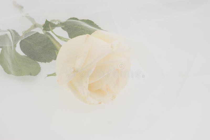 Белая роза покрытая путем wedding вуаль стоковая фотография