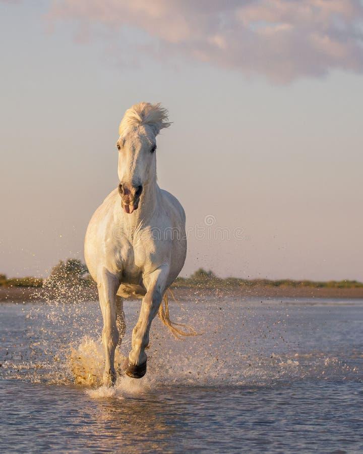 Белая смешная лошадь стоковое изображение