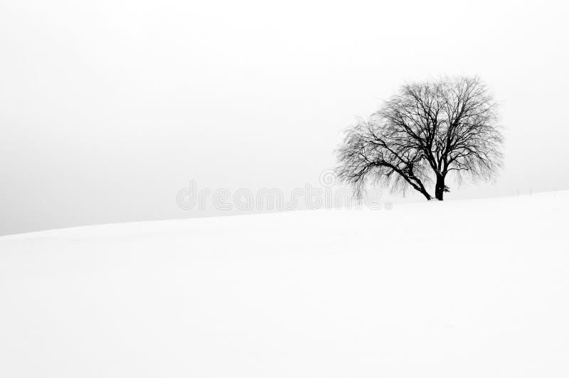 Белая сцена зимы с одним деревом стоковые фотографии rf
