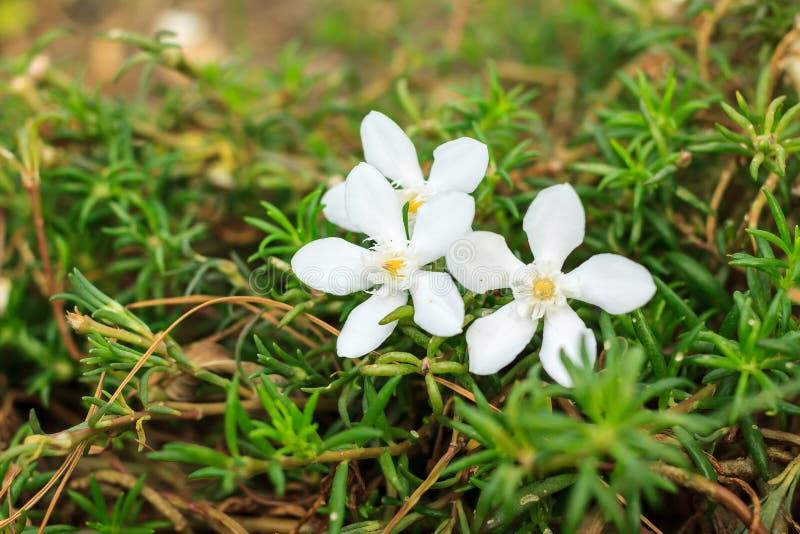 Белая флора стоковые фото