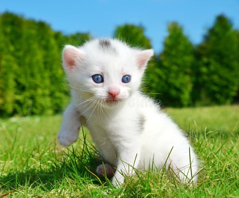 белизна близкого котенка малая поднимающая вверх стоковое изображение rf