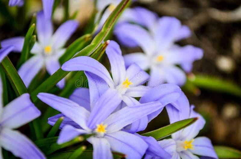 белизна весны пущи цветка стоковое изображение