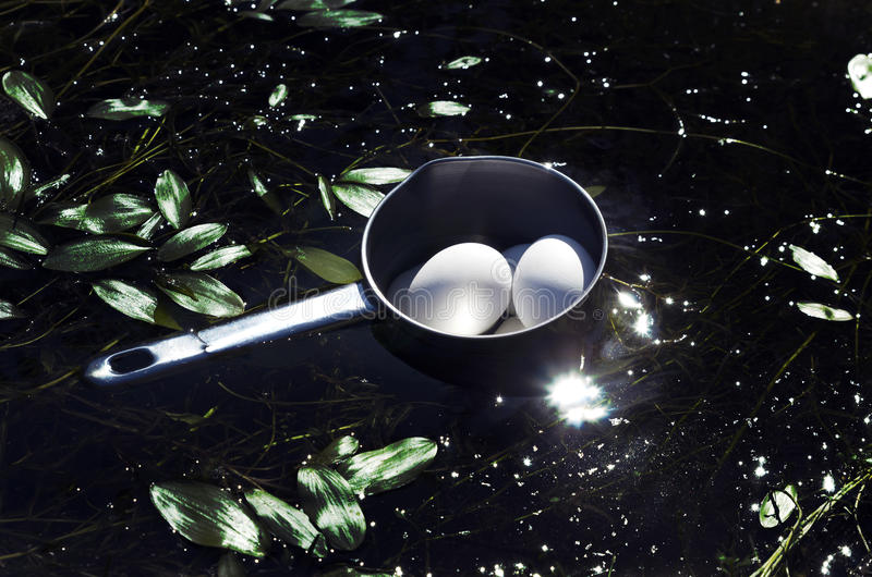 Белизна закипела яичка курицы охлаждая в воде озера в лагере стоковые изображения
