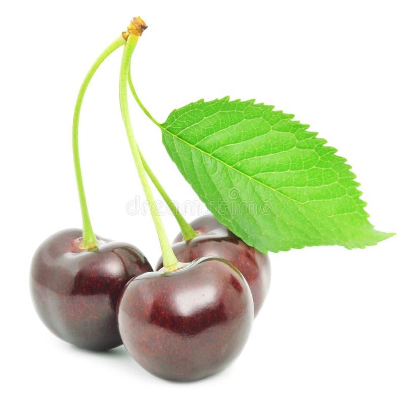белизна изоляции вишни сладостная стоковое изображение