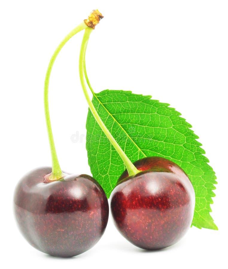 белизна изоляции вишни сладостная стоковые фото