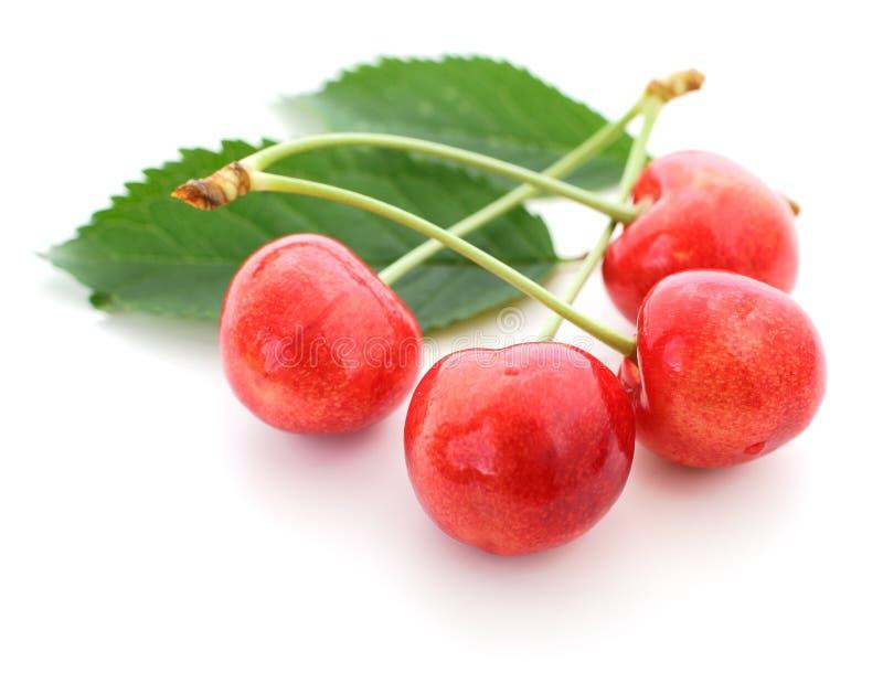 белизна изоляции вишни сладостная стоковые фотографии rf