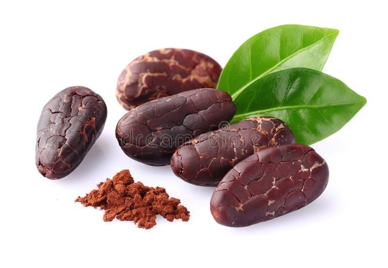 белизна иллюстрации cacao фасолей предпосылки темная стоковая фотография rf