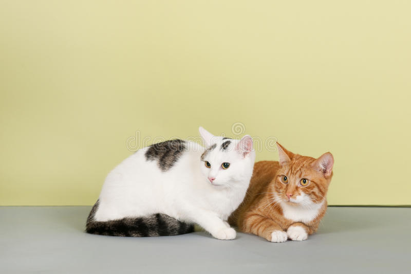 Download белизна кота красная стоковое изображение. изображение насчитывающей красно - 40583185