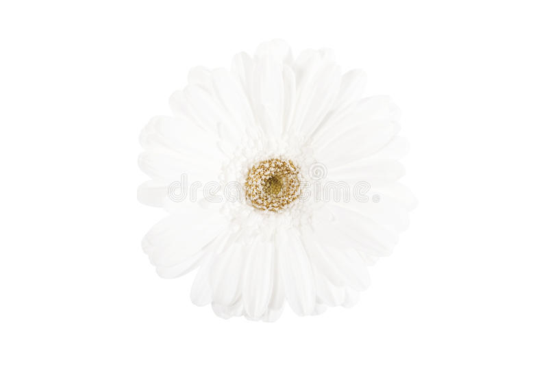 Белизна на белизне стоковые фото