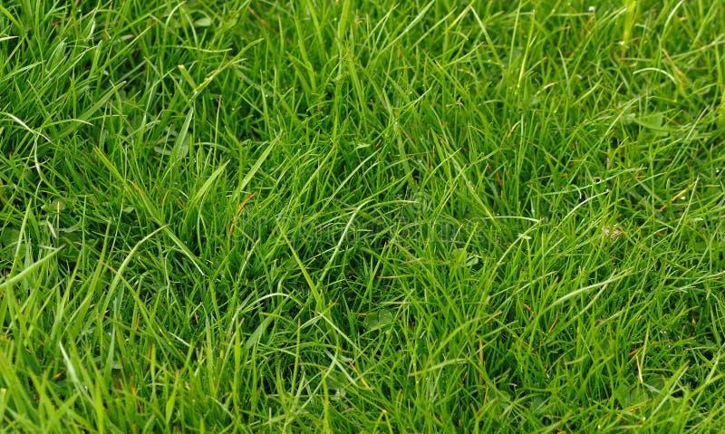 Download белизна предпосылки изолированная травой Стоковое Изображение - изображение насчитывающей трава, backhoe: 40583451