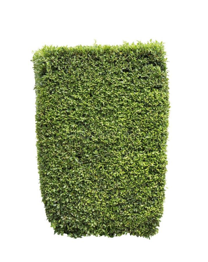 белизна предпосылки изолированная bush стоковая фотография