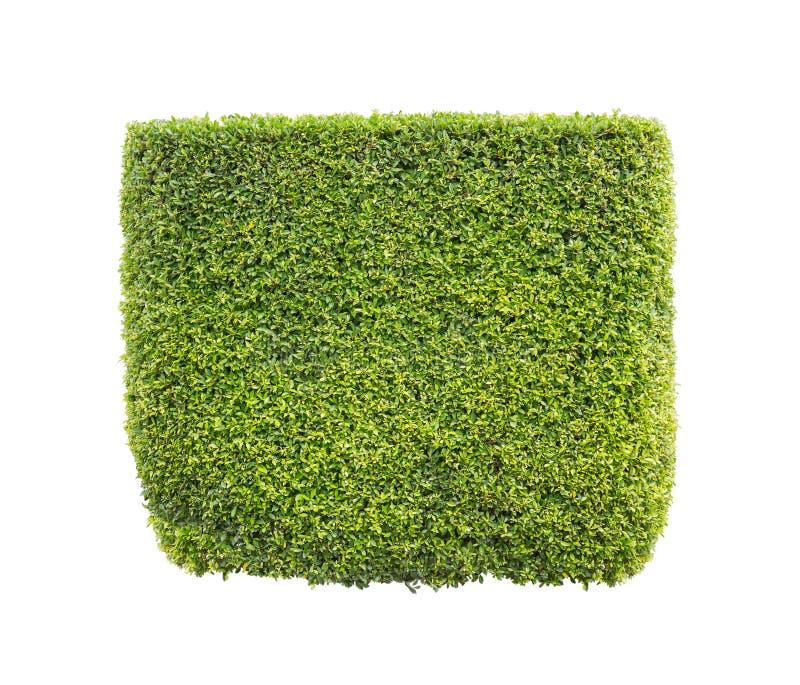 белизна предпосылки изолированная bush стоковое фото
