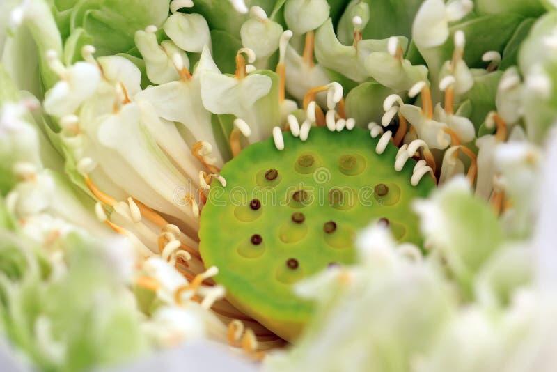 Download белизна путя лилии клиппирования изолированная цветком Стоковое Фото - изображение насчитывающей лотос, пруд: 40588436