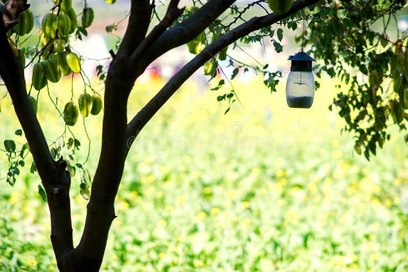 белизна путя микстуры крышки ярлыка пустого клиппирования коричневого цвета бутылки 100ml childproof стеклянная включенная изолир стоковые изображения