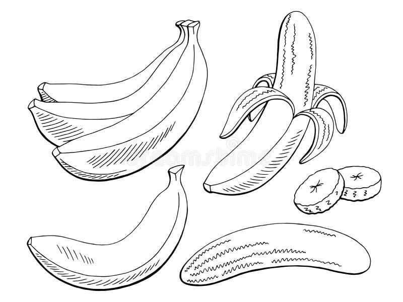 Белизна плодоовощ банана графическая черная изолировала иллюстрацию эскиза бесплатная иллюстрация