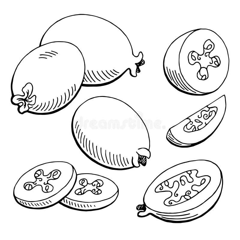 Белизна плодоовощ Feijoa графическая черная изолировала иллюстрацию эскиза иллюстрация вектора