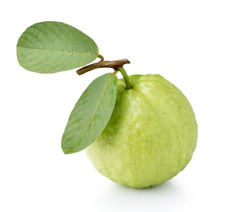 белизна guava плодоовощ предпосылки стоковые фото