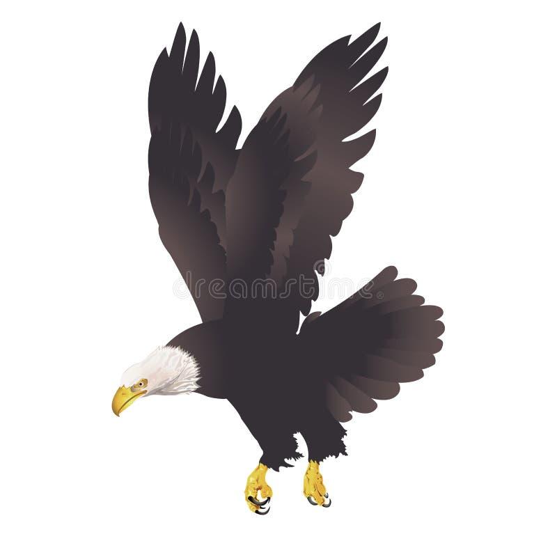 Белоголовый орлан на белой предпосылке иллюстрация штока