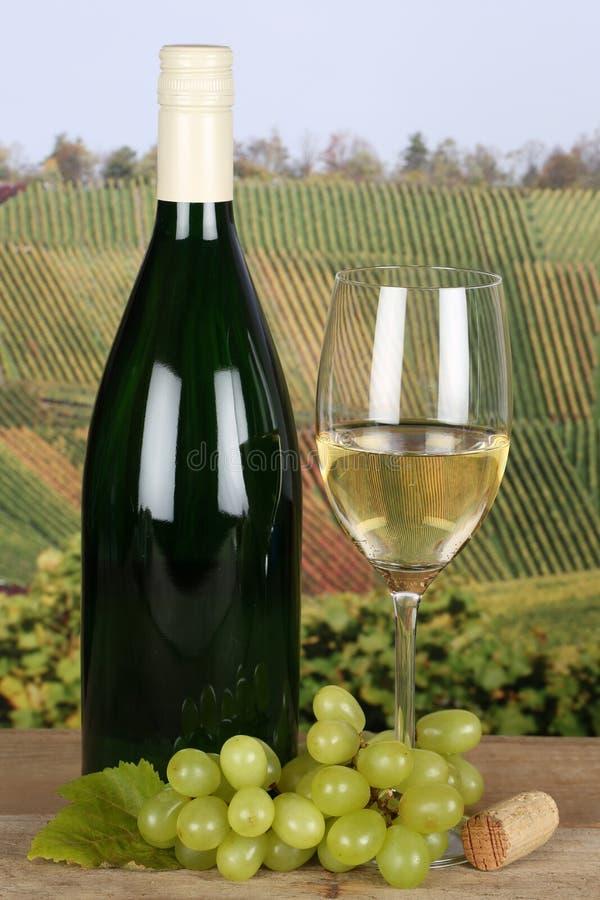 Белое вино в бутылке в виноградниках стоковые изображения